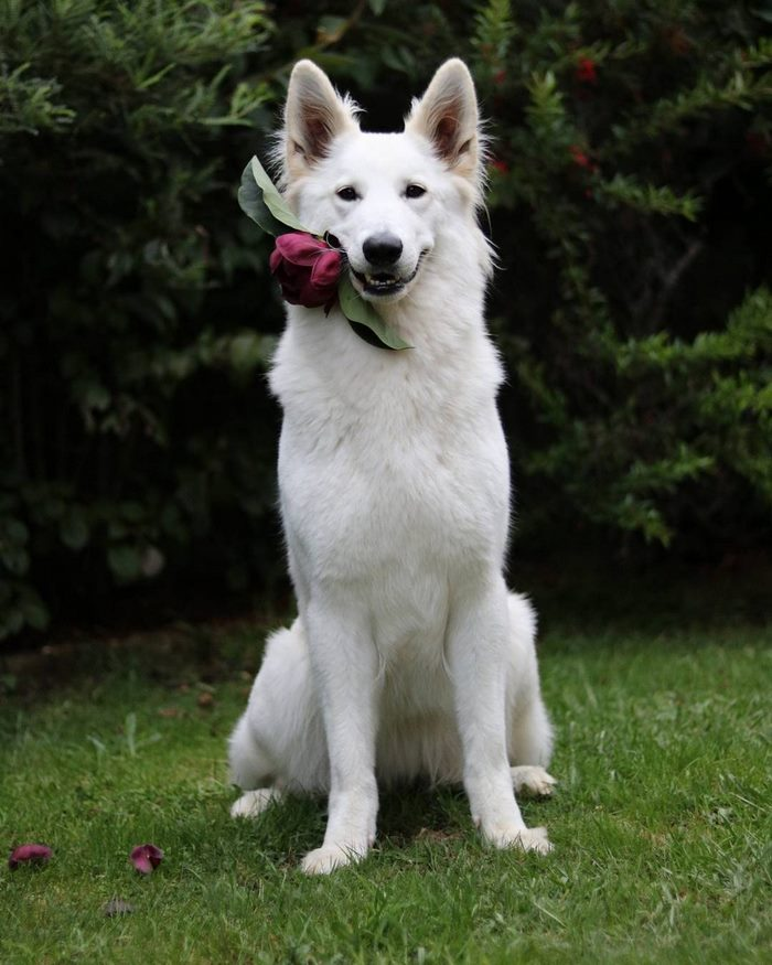 dog-wedding-photograpy-kaya-smiley-1