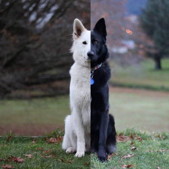 dog-wedding-photograpy-kaya-smiley-12