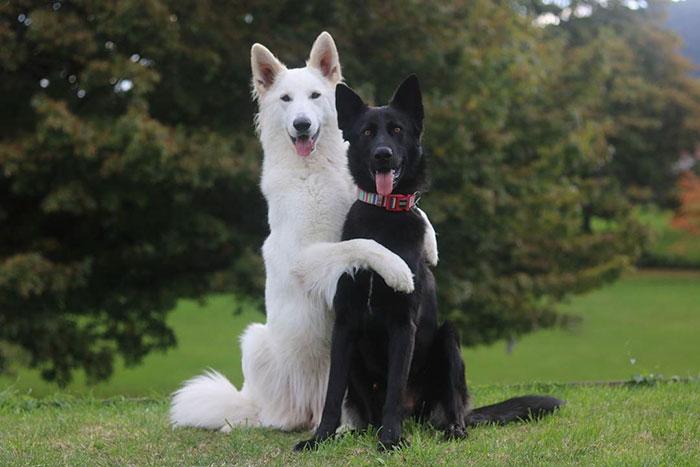 dog-wedding-photograpy-kaya-smiley-22