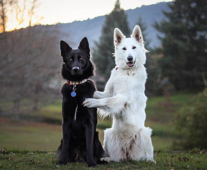 dog-wedding-photograpy-kaya-smiley-4