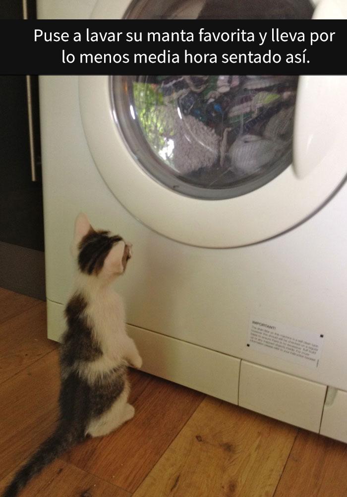 gatos-snapchat-2-10-594bbde3c166e__700