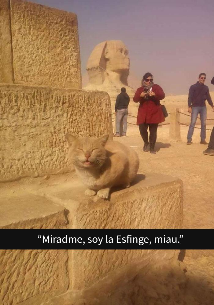 gatos-snapchat-2-18-594bbdf1855d2__700