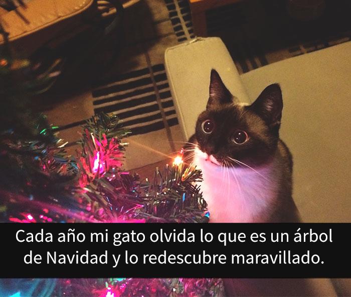gatos-snapchat-2-21-594bbdf63ee94__700
