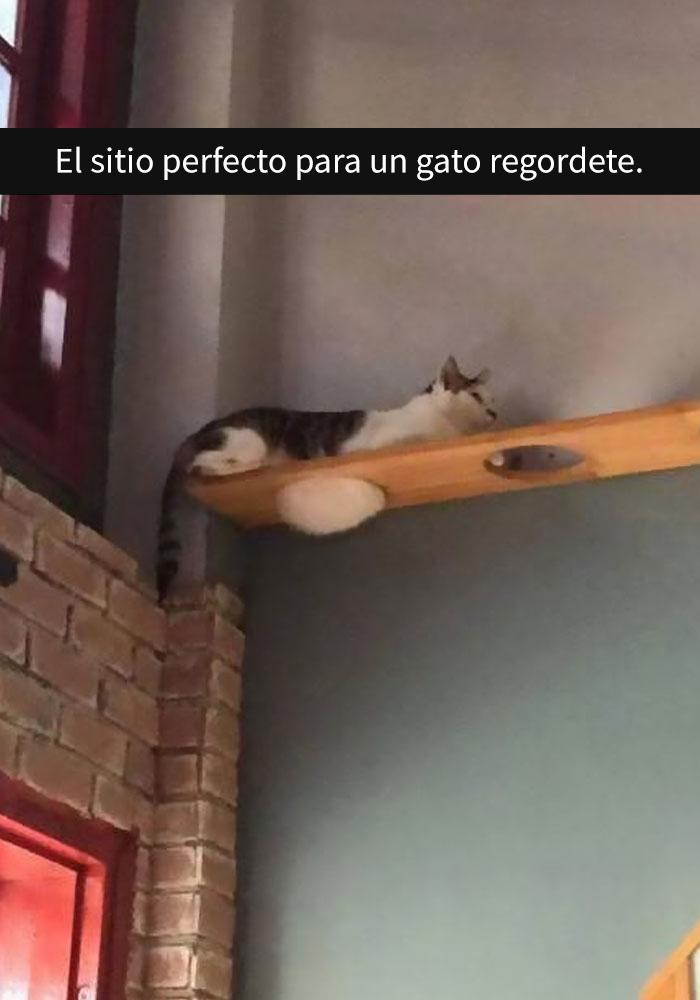 gatos-snapchat-2-26-594bbdff08317__700