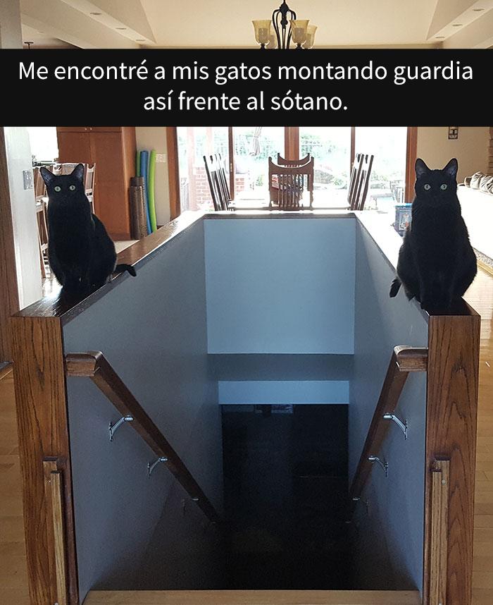 gatos-snapchat-2-29-594bbe0444d56__700