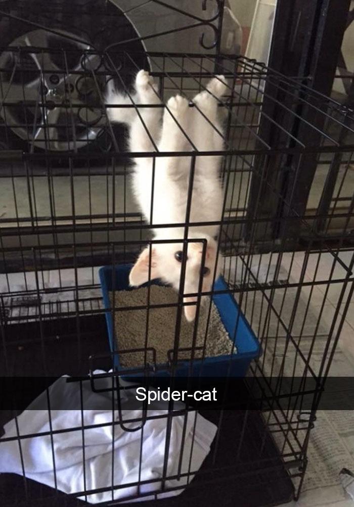gatos-snapchat-2-31-594bbe0790c50__700