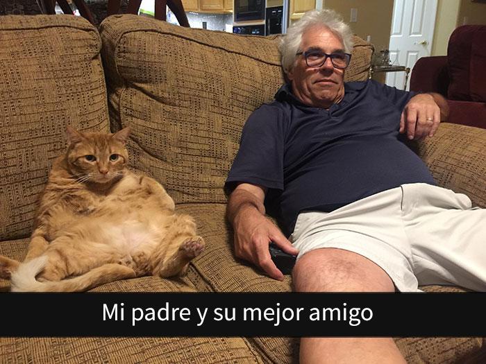 gatos-snapchat-2-4-594bbdda8e631__700