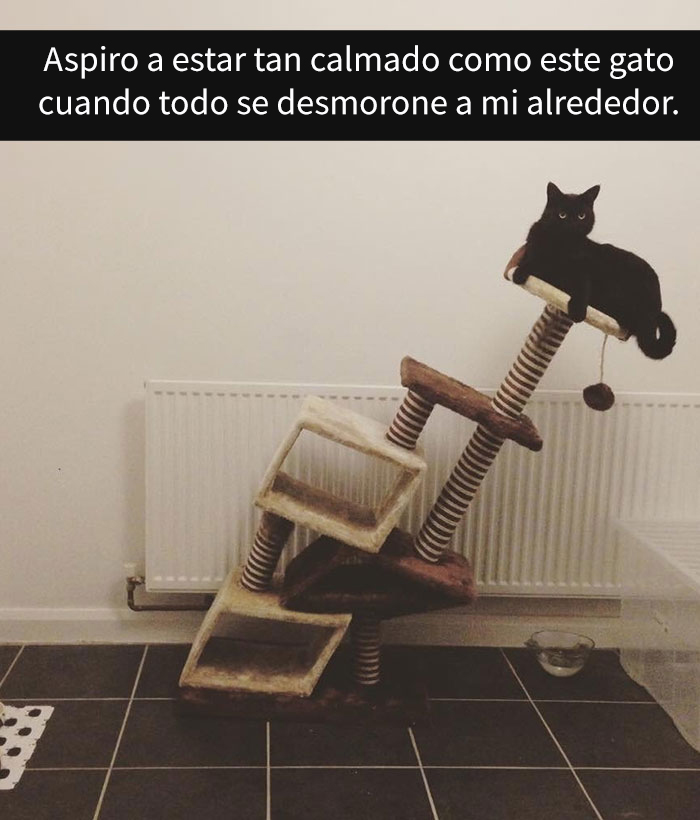 gatos-snapchat-2-9-594bbde243031__700
