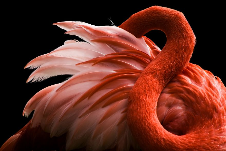 pink-flamingo-day-2017-5926c1523b960__880
