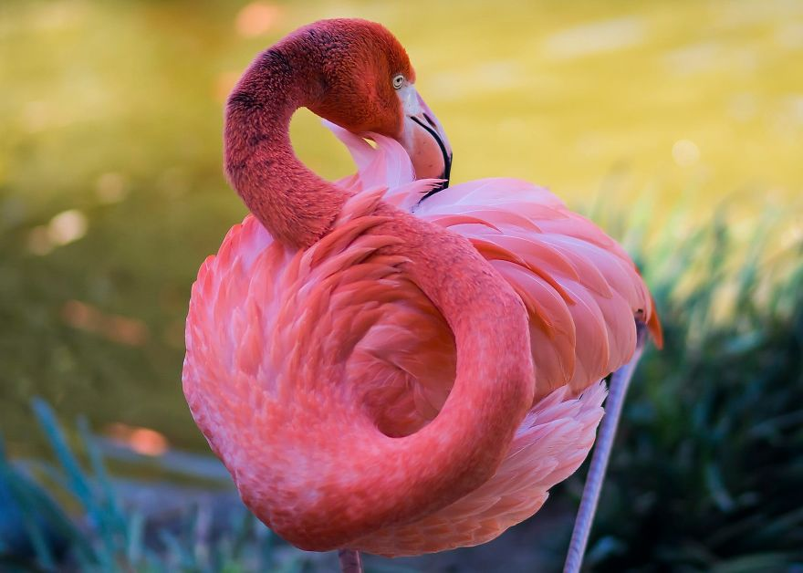pink-flamingo-day-2017-5926c2b9181aa__880