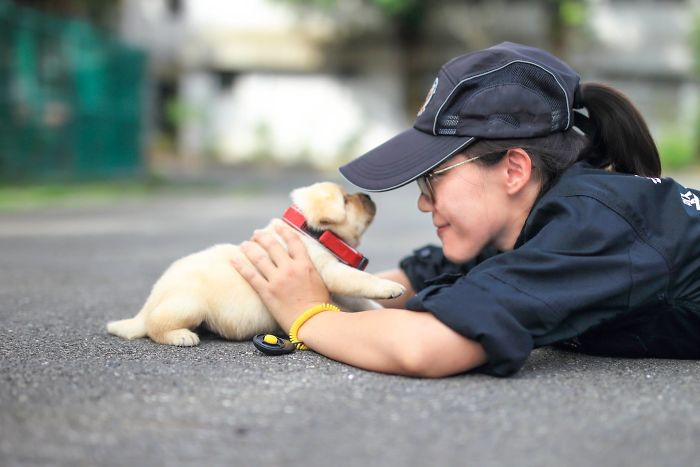 puppy-k-9-police-dogs-taiwan-police-6-594105733967d__700