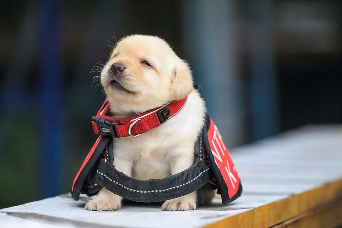 puppy-k-9-police-dogs-taiwan-police-8-594105d066f5f__700