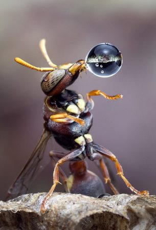 0_CATERS_BUBBLE_WASP_01-305x449
