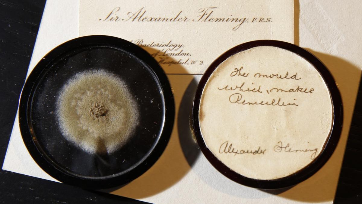 Britain Penicillin Mold