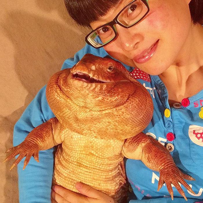dog-sized-tegu-lizard-macgyver-argentine-14-595f901f0ae7a__700