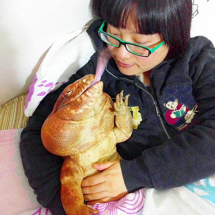 dog-sized-tegu-lizard-macgyver-argentine-15-595f9020d407f__700