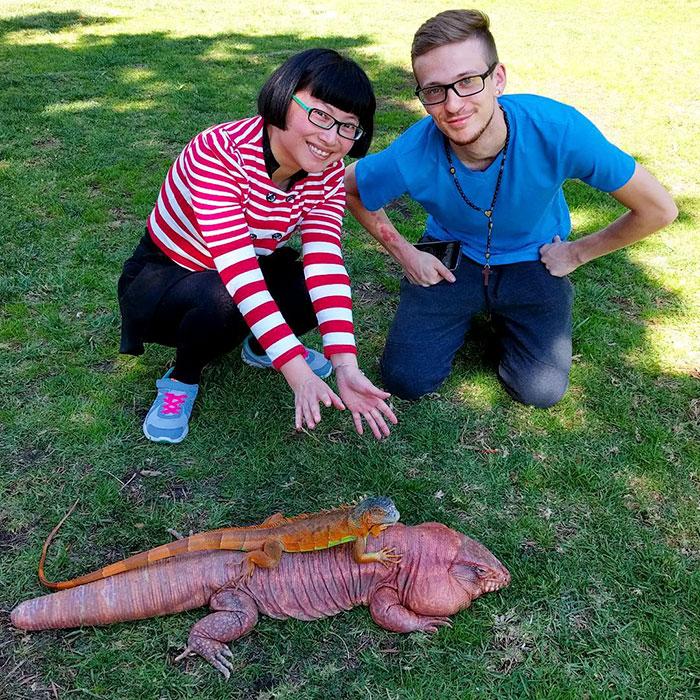 dog-sized-tegu-lizard-macgyver-argentine-231-595f92b598595__700