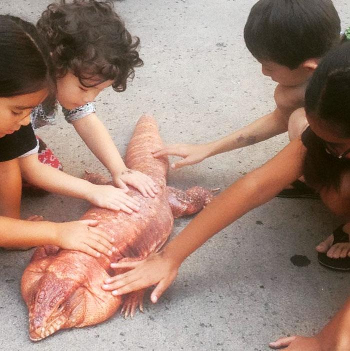 dog-sized-tegu-lizard-macgyver-argentine-3-595f900884990__700