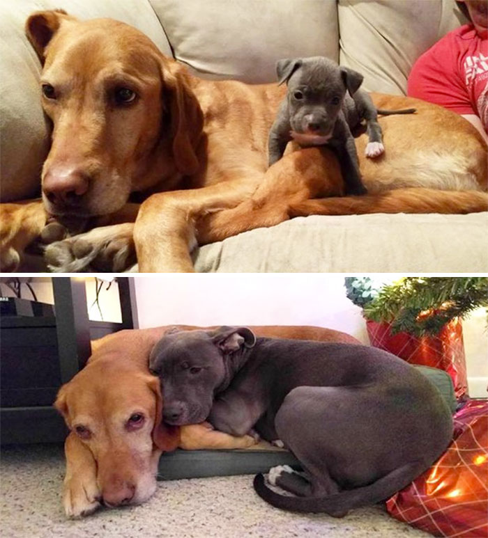 dogs-growing-up-before-after-109-594b6767828c6__700