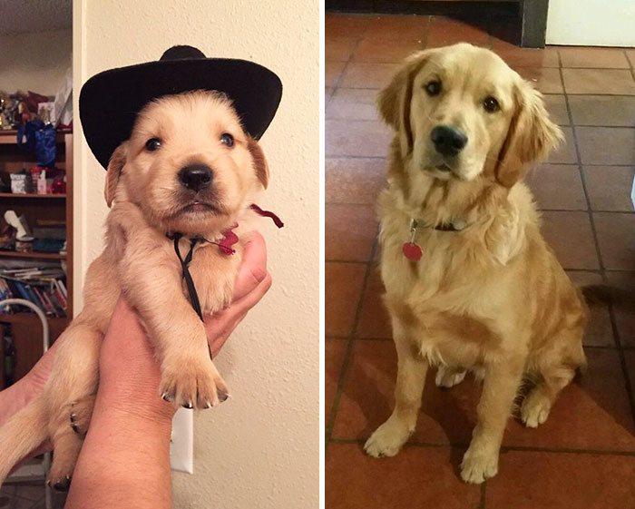 dogs-growing-up-before-after-215-594b7e3d69989__700