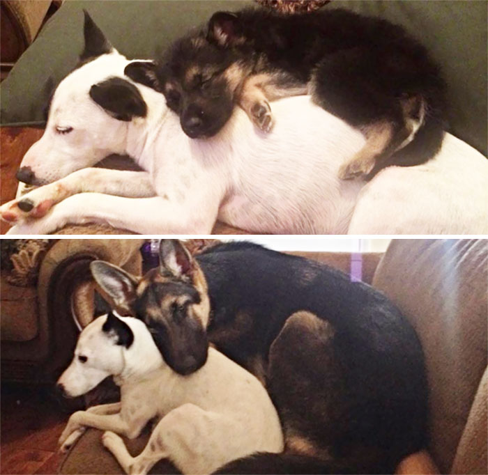 dogs-growing-up-before-after-29-594b73a14fd14__700