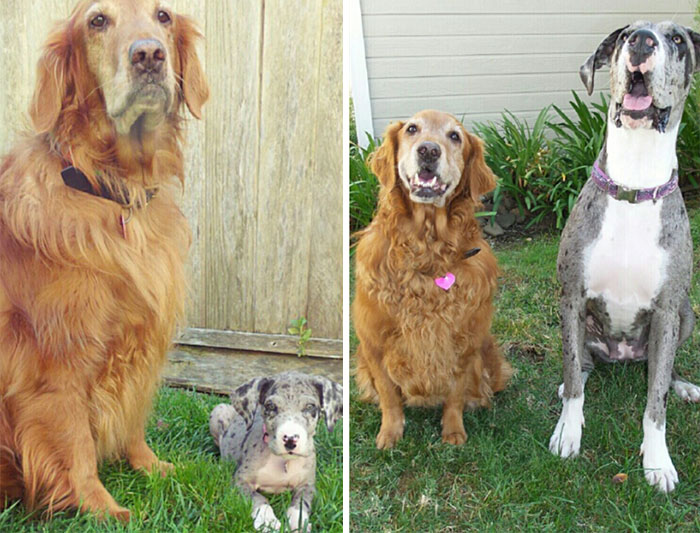 dogs-growing-up-before-after-32-594b749a3bb1f__700