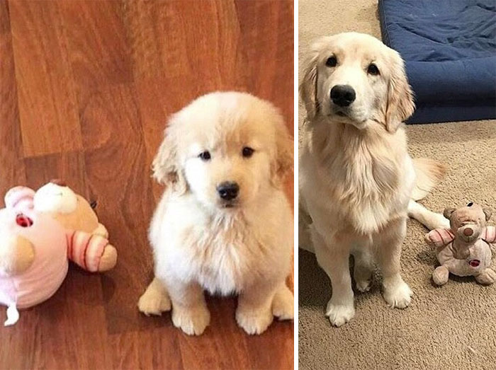 dogs-growing-up-before-after-59-594b8c173da90__700