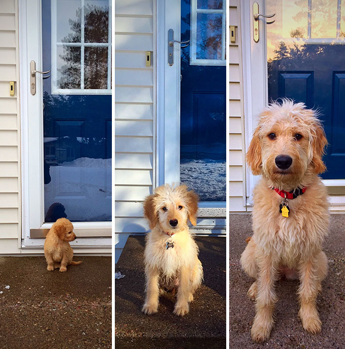 dogs-growing-up-before-after-user-submissions-1-5943bcf053ea0__700