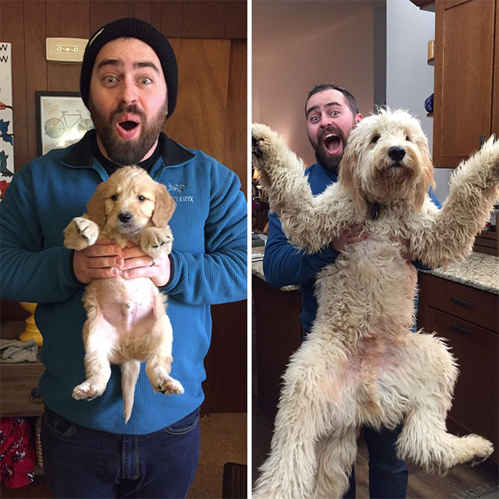 dogs-growing-up-before-after-user-submissions-106-594b64acb735e__700