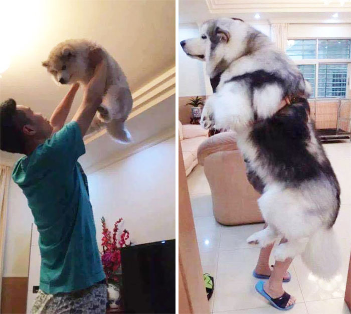 dogs-growing-up-before-after-user-submissions-107-594b666253a82__700