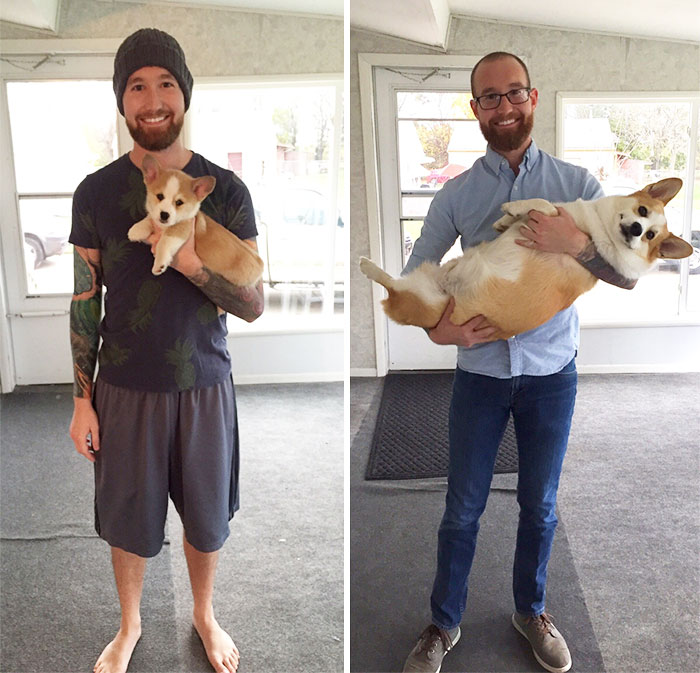 dogs-growing-up-before-after-user-submissions-108-594b66e2f3215__700