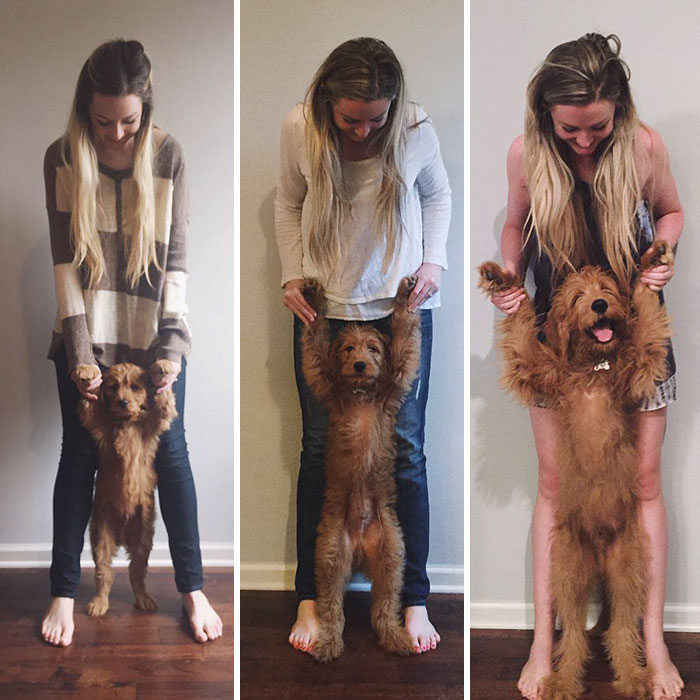 dogs-growing-up-before-after-user-submissions-4-5943beef0470f__700
