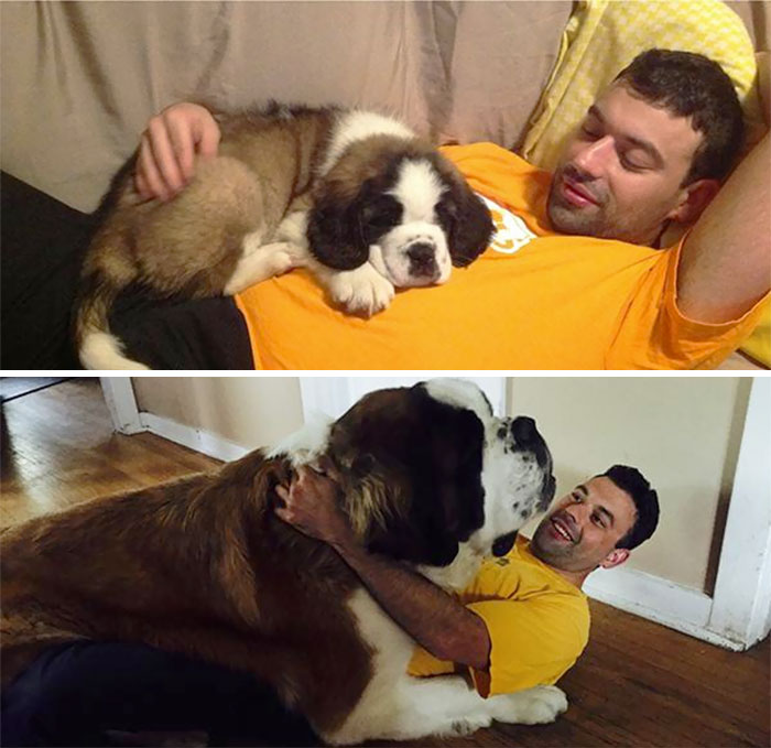 dogs-growing-up-before-after-user-submissions-94-594a872dc1400__700