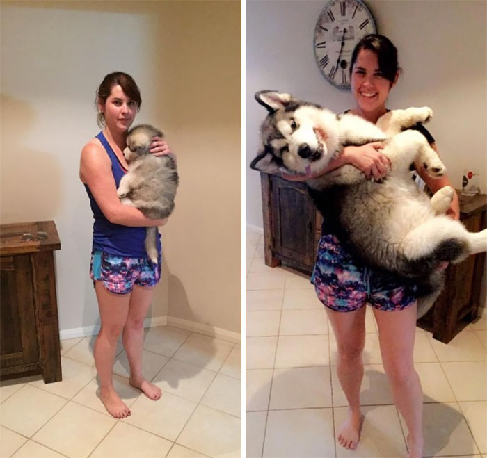 dogs-growing-up-before-after-user-submissions-97-594a882d5468e__700