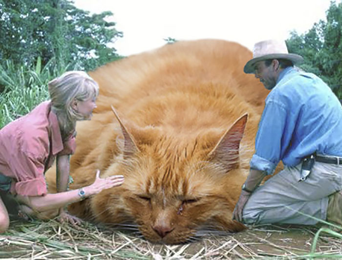 jurassic-park-dinosaurs-replaced-with-cats-1-597834f294772__700