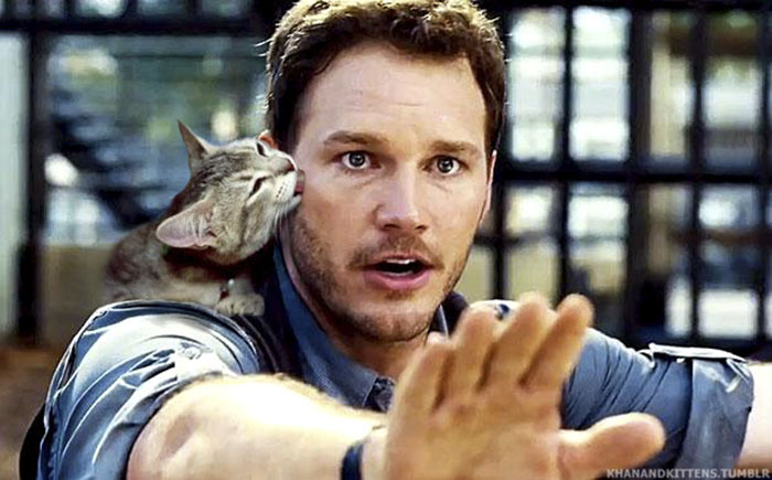 jurassic-park-dinosaurs-replaced-with-cats-11-5978350a58490__700