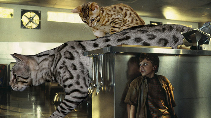 jurassic-park-dinosaurs-replaced-with-cats-18-59783516c53c9__700