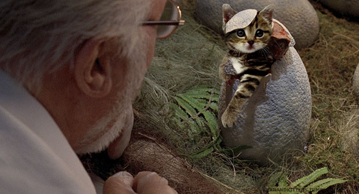 jurassic-park-dinosaurs-replaced-with-cats-21-5978351c2eb96__700