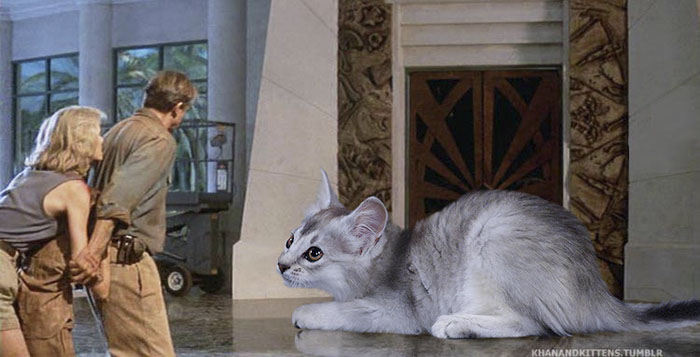 jurassic-park-dinosaurs-replaced-with-cats-3-597834f7c1b2f__700