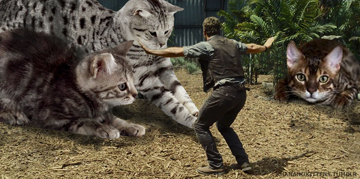 jurassic-park-dinosaurs-replaced-with-cats-6-597834fe1a62f__700