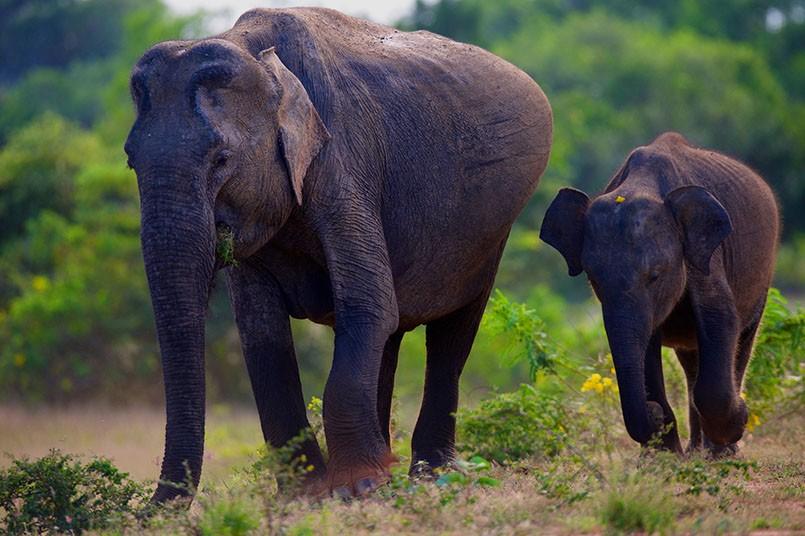 mama-elefante-embarazada.jpg.imgw.1280.1280