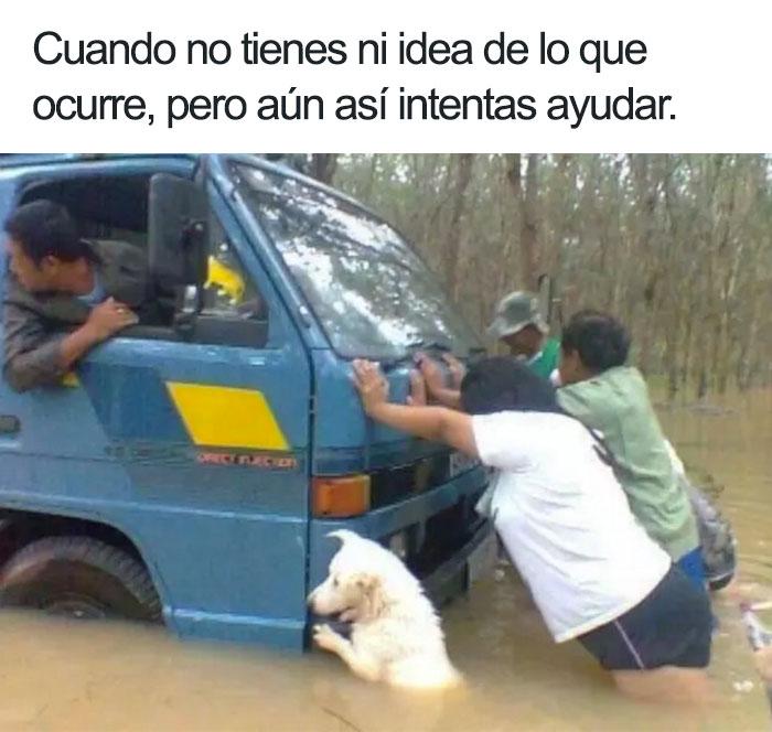 memes-animales-1-58f5f9f733d95__700-5909fd15ac09c__700