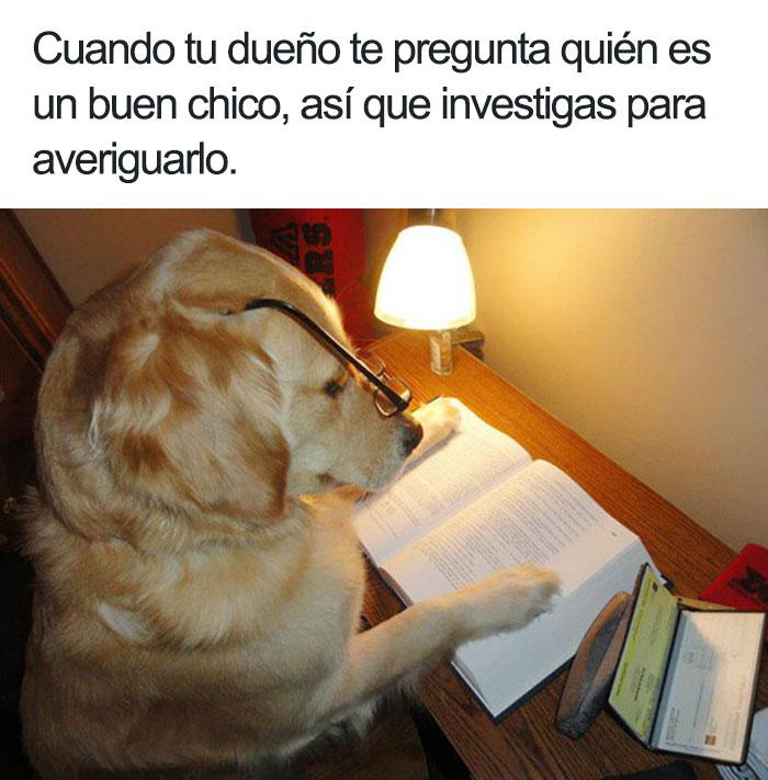 memes-animales-23-58f5fc703305a__700-5909ff26d2de6__700