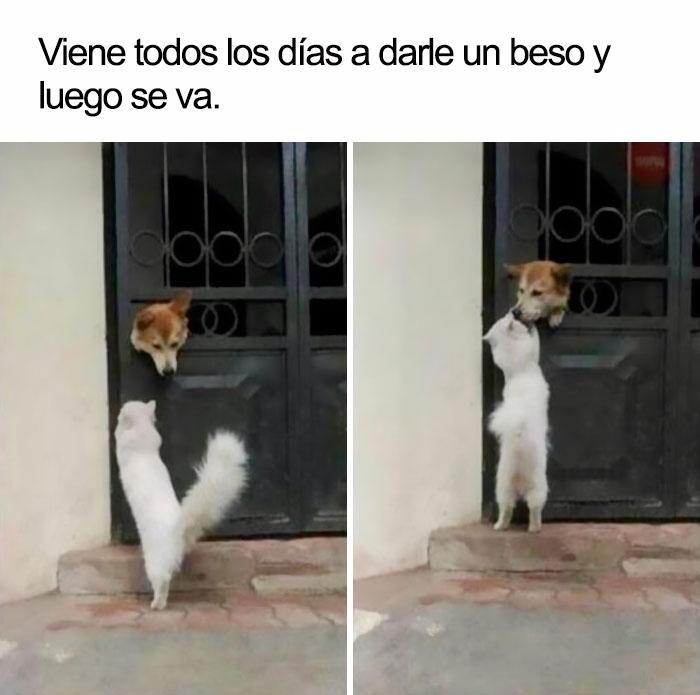 memes-animales-35-58f5f9ccd0d65__700-5909fbd71e062__700