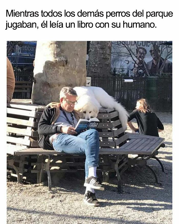 memes-animales-40-58f5faa303537__700-5909fd288ddfe__700