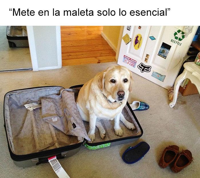 memes-perros-1-5909fc6dae984__700
