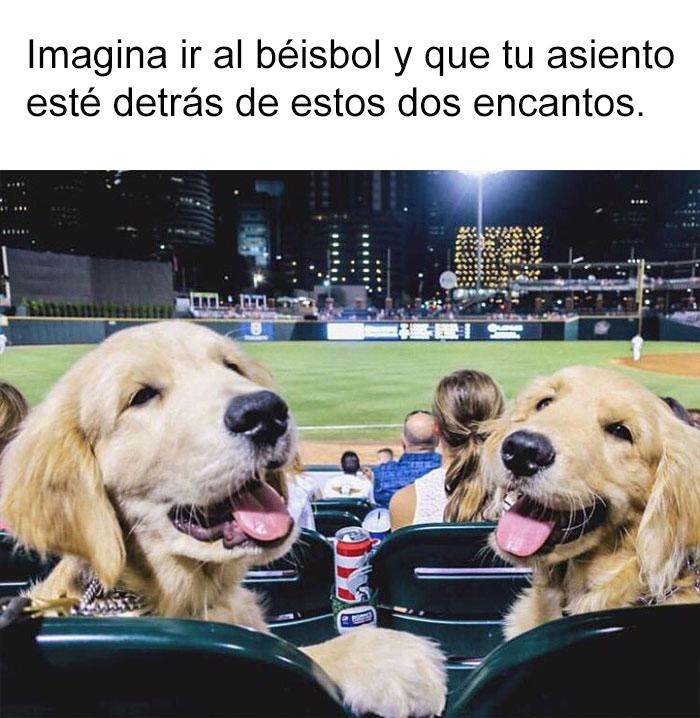 memes-perros-10-5909fdd5bf45e__700