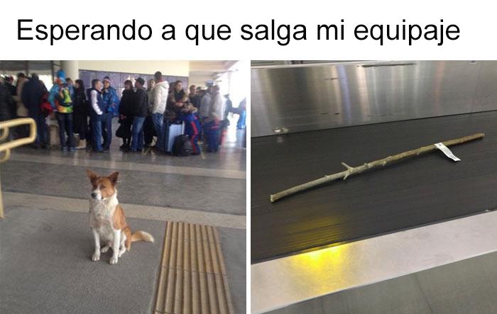 memes-perros-11-5909fbec772fb__700