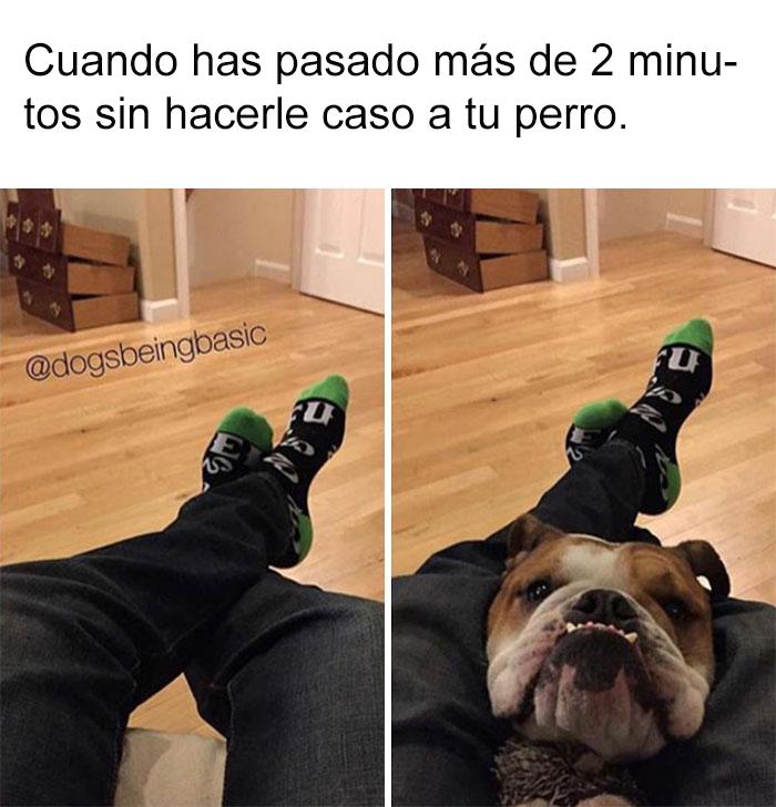 memes-perros-12-5909fd6009ff9__700