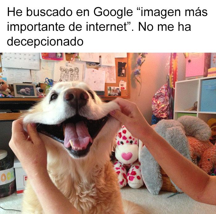 memes-perros-13-5909fc19abad0__700